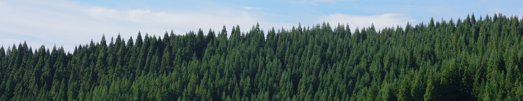 住宅に使用される森林